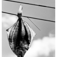 """Always Look on the Bright Side"" - Jammerbugten #Skagen_Nordfriesland"